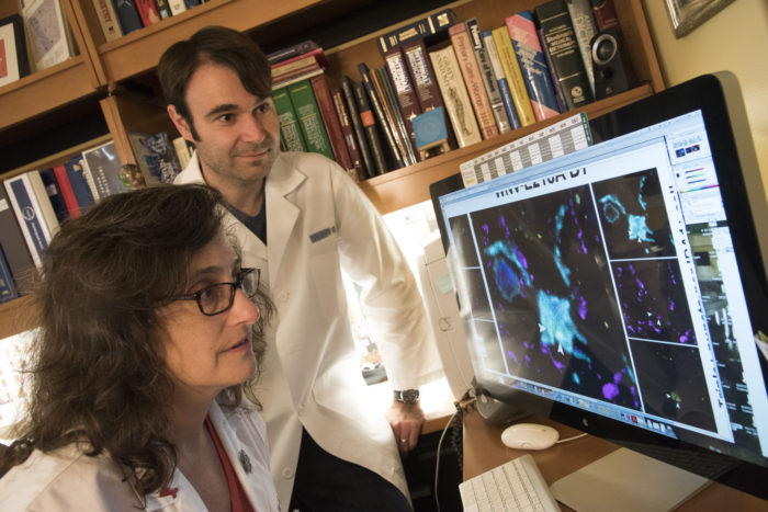 Robyn Klein, MD, PhD, and Michael Vasek, PhD, examine images of mouse synapses. The researchers found that memory loss suffered by some survivors of West Nile encephalitis may be caused by the loss of synapses between neurons.