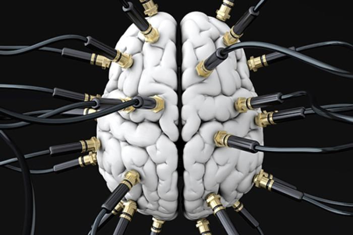Brain-connection-traits