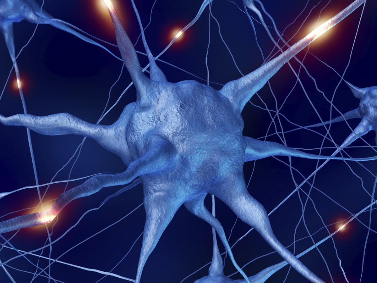Major Project Maps Brain U2019s Wiring  U2013 Washington University
