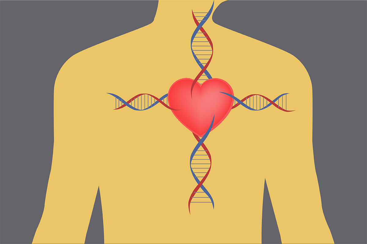 Growing a 'heart' from stem cells