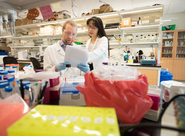 Li Ding, PhD, right, works with Steven Foltz, a graduate student in her lab. Ding develops computational tools to study the genetics of cancer. To support and inform her methods for big data analysis, she also uses traditional lab techniques to further understand tumor biology, seeking new therapies for cancer patients.