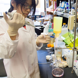 Haiyan Zhao, PhD, a postdoctoral researcher in Daved Fremont's laboratory, purifies the Zika surface protein that allows the virus to enter and infect cells of the body.